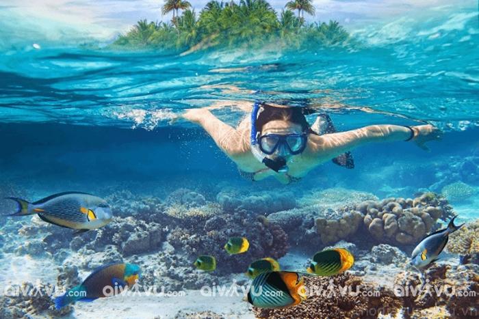 Lặn ngắm san hô ở Cù Lao Chàm - Trải nghiệm không nên bỏ lỡ khi du lịch Đà Nẵng