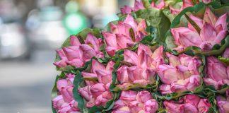 Du lịch Hà Nội mùa hè ngắm những sắc hoa rực rỡ