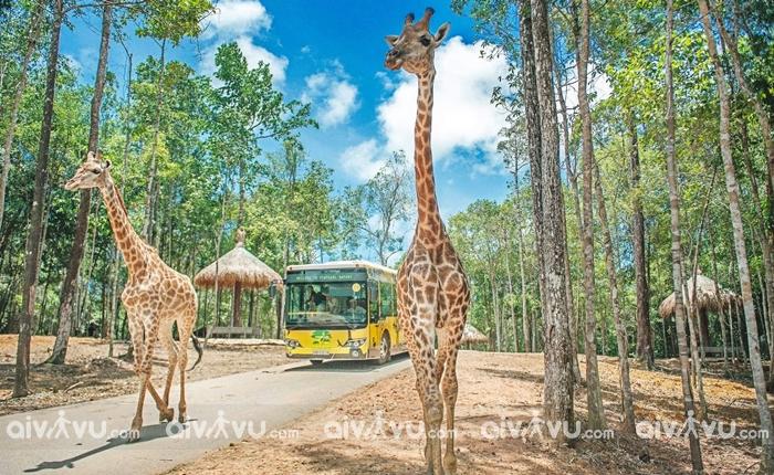 Du lịch Phú Quốc mùa mưa đến Vinpearl Safari