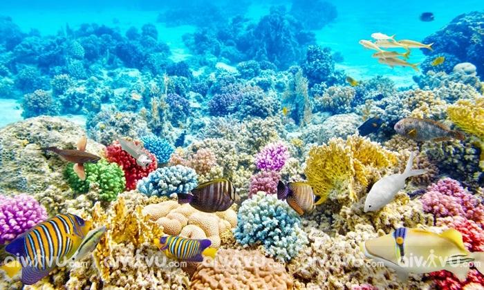 Lặn ngắm san hô ở Kending