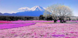 Vì sao nên du lịch Nhật Bản mùa hè?