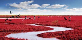 Bãi biển đỏ, Panjin, Trung Quốc - Điểm du lịch độc đáo nhất thế giới