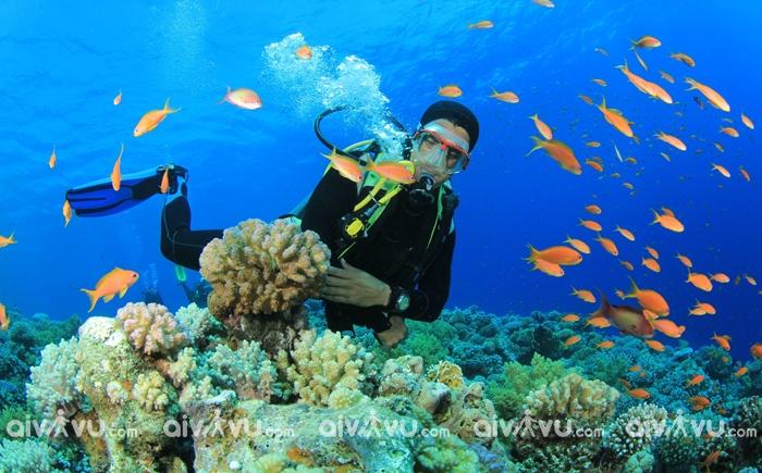 Tháng 8 du lịch Nha Trang đi đâu?