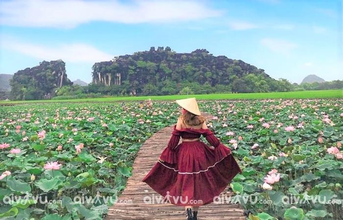 Tới Tam Cốc Bích Động Ninh Bình ngắm hoa sen nở