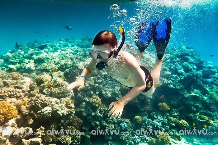 Tuyệt đối không phá hoại san hô khi lặn biển