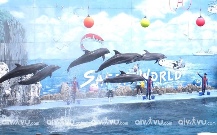 Chương trình biểu diễn cho cá ăn tại Safari Phú Quốc