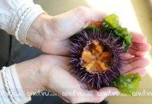 Điểm danh những món ăn nổi tiếng từ hải sản của Phú Quốc