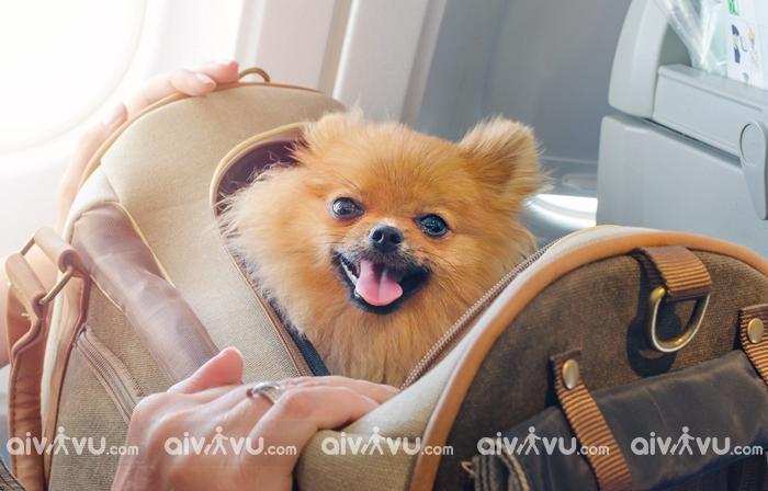 Những vật nuôi bị hạn chế vận chuyển trên chuyến bay Asiana Airlines