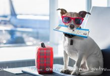 Quy định vận chuyển vật nuôi thú cưng trên máy bay Asiana Airlines