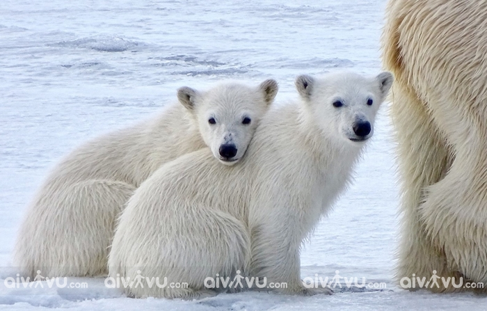 Đảo Baffin điểm du lịch được yêu thích tại Canada