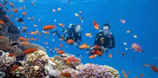 Top 5 hòn đảo du lịch mang vẻ đẹp tự nhiên hấp dẫn bậc nhất Nha Trang