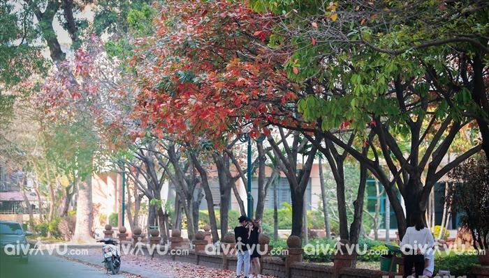 Con đường tình yêu tại Đại học Sư phạm Hà Nội