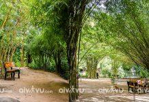Vườn trúc xanh tại Sơn Trà Tịnh Viên chốn bồng lai Đà Nẵng