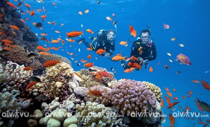 Những địa điểm lặn biển Nha Trang trải nghiệm đầy thú vị