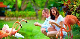 Top 5 vườn bách thảo ở Mỹ thu hút khách du lịch