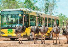 Thăm thú thế giới động vật tại Vinpearl Safari Phú Quốc